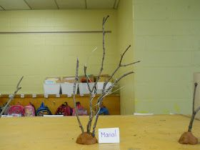 Building our Reggio Emilia Inspired Classroom: Working with Wire and Twigs