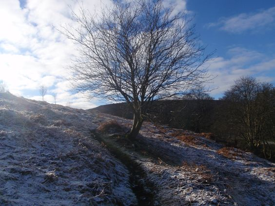 Another from my album, taken on a North Yorkshire moors walk on a cold frosty day.