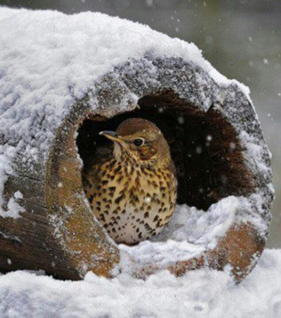 winter birds in snow | Bird In Winter Snow | Snowy Creatures: