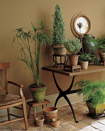 True khaki, like these walls, veers toward the green. It looks its best in the warm light of a sunny room, its greenness tempered by potted ferns, a papyrus plant, and a myrtle topiary.