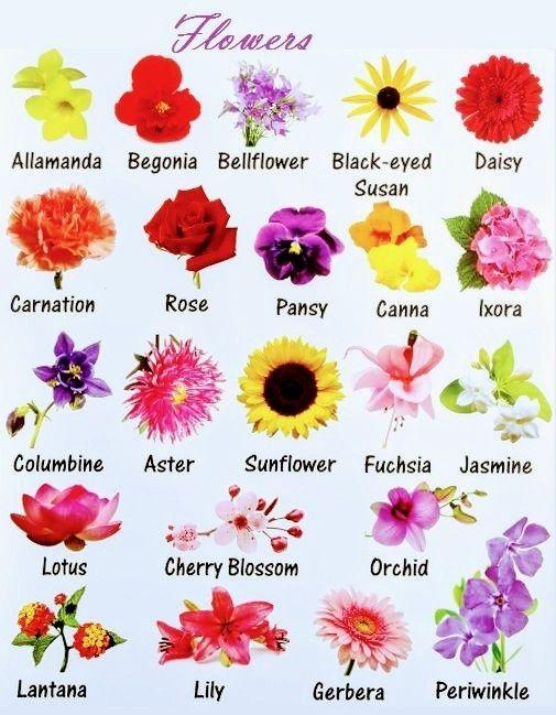 Pin By Yana Bondar On Dlya Sketchej In 2020 English Vocabulary English Flowers Learn English Vocabulary