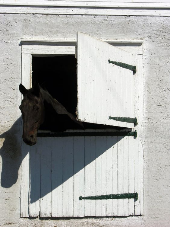Barn Window with Horse Lancaster County PA by ChristinaBroyer, $15.00