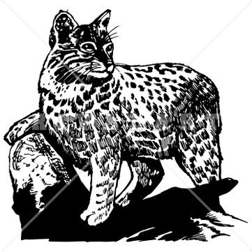 Mascot Clipart Image of Black White Bobcats Wildcats Graphic Mean ...