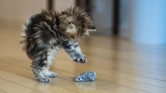 lustige katzen bilder katzenerziehung katze erziehen