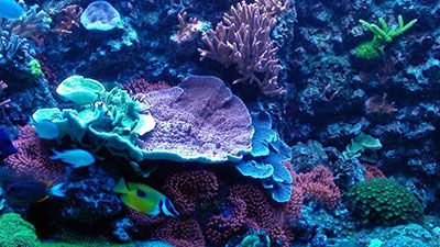 For beginners like me everything you need to know for Beginner saltwater fish