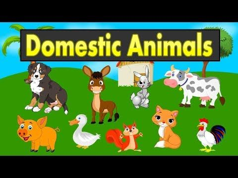 Domestic Animals Names For Kids Animals For Kids Animal Sounds Animals