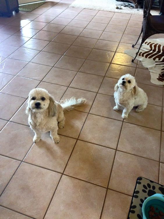 Madden And Nieko Taken By Sitter Melanie Service Animal Love Your Pet Pet Home