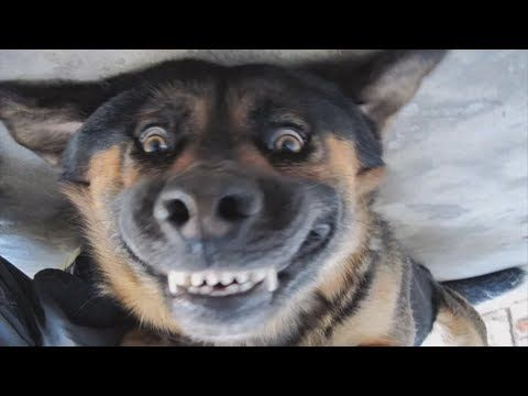 Dogs Smiling For Camera Compilation Youtube Funny Cats And