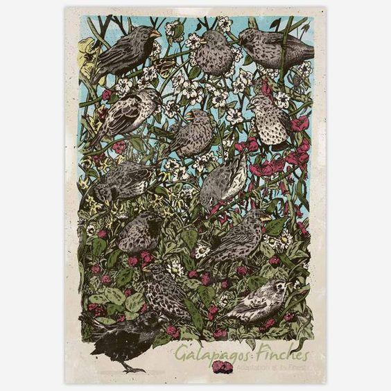 Adaptation At Its Finest 13x19 art, digital print, multi