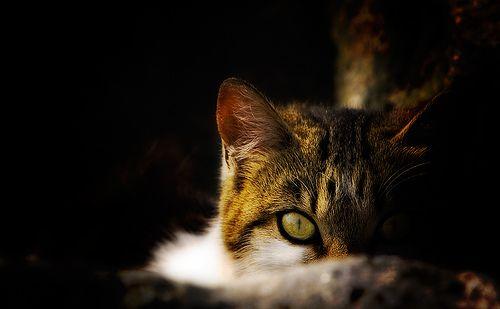 Cautious Regard   Cat