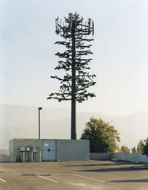 torre de telefonía celular disfrazado de árbol (10)