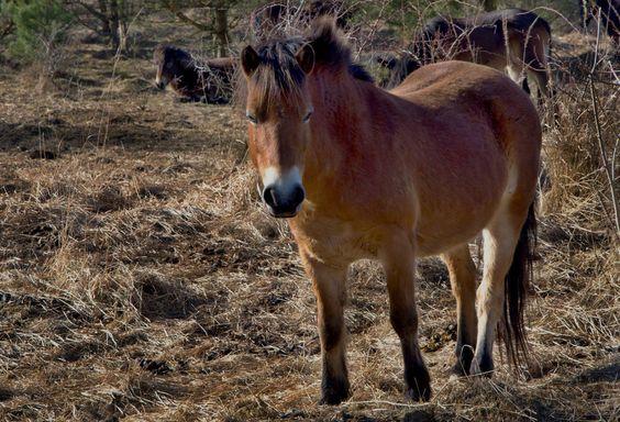 Divoké koně podporují děti z MŠ v Milovicích. Šek na částku 5120 korun převzal z jejich rukou Dalibor Dostál, ředitel ochranářské organizace Česká krajina.