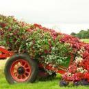 Decorar-o-seu-jardim-com-uma-carroça-e-flores-19