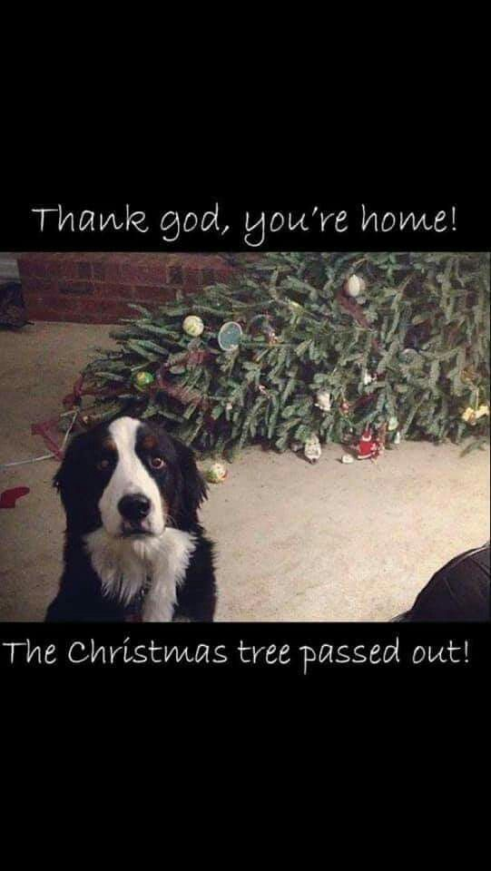 Puppy Love By Bill Acton On Christmas Thank God Funny Animals