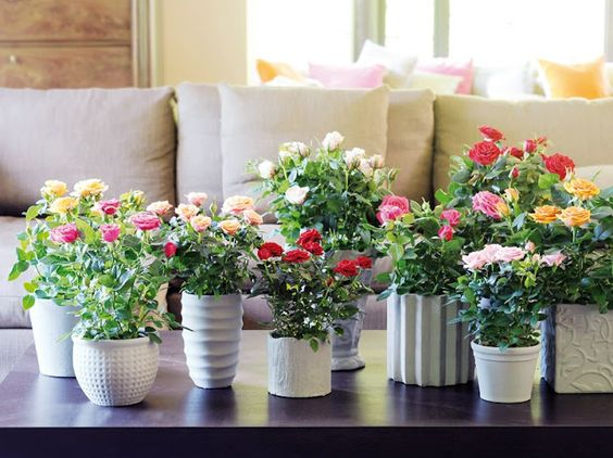 Vasos de flores reunidos | COPY