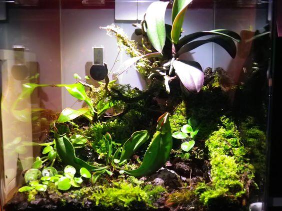 30 L Nano Cube: für eine Zwerg-Phalenopsis, eine Kannenpflanze und eine Schlauchpflanze