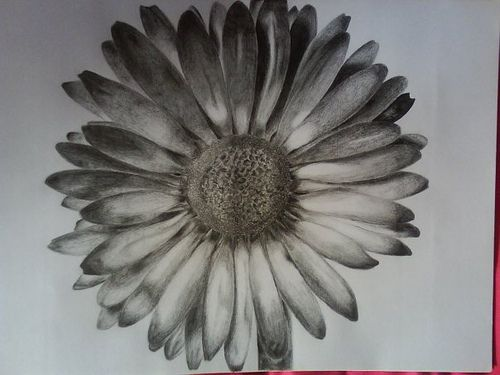 Daisy Flower Drawing Tumblr Daisy drawn by me : ) | Andrew ...