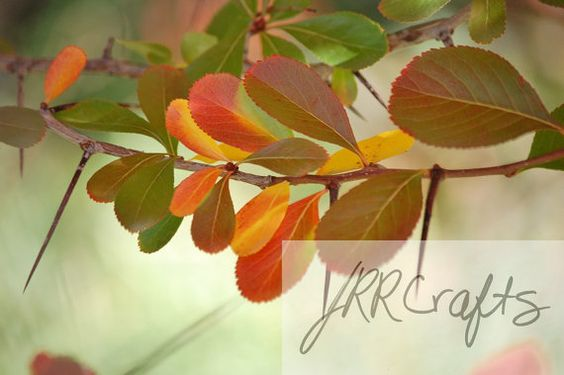 """Fall Leaves on Thorny Bush by JRRCrafts on Etsy, $30.00 Please """"like"""" my page on Facebook, One Crafty Rose, to keep up to date with the newest items!  Thank you for looking at my crafts!"""