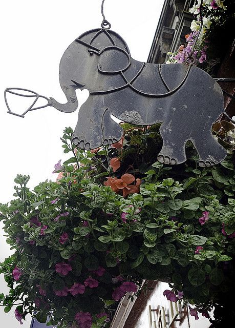 The Elephant House With Images Elephant Shop Signs Pub Signs