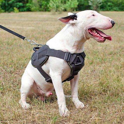 Nylonowe Szelki Wielofunkcyjne Dla Psa Moc Do Ciagniecia Bull Terrier English Bull Terriers Dog Harness