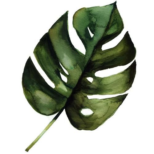Monstera Leaf Watercolor Paint Tutorial Painted Leaves