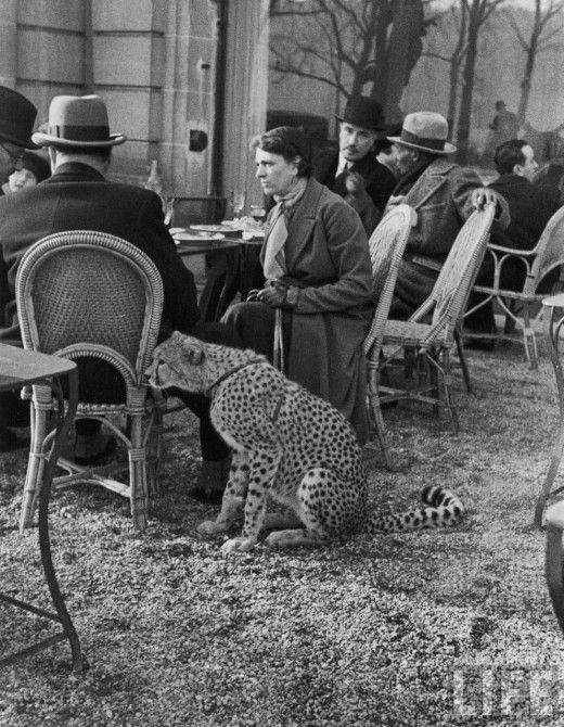 et un café pour ma cheetah s'il vous plaît (Paris, 1963)