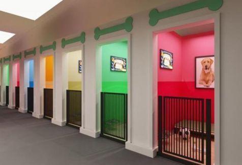 Dog Grooming Salon Ideas Diy Dog Grooming Salon Ideas In 2020 Indoor Dog Park Dog Kennel Dog Boarding Facility