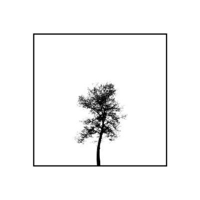 minimal ağaç