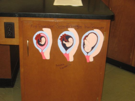The stages of fetal development painted on my lab table. An original art piece!