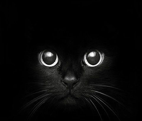 This looks so much like our cat when she was younger - amazingly black and with a beautiful button nose.