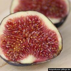 Feigenbaum Vermehrung: Samen & Stecklinge