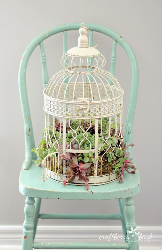 decorate succulents in a birdcage id e d co pinterest. Black Bedroom Furniture Sets. Home Design Ideas