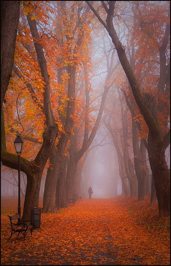 Taking a stroll on a foggy autumn evening.