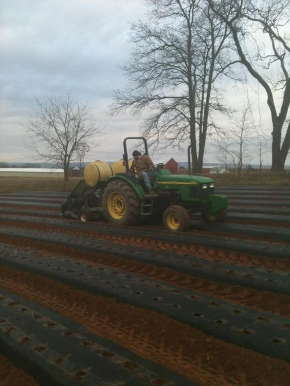 The first 900 pounds of potatoes are planted!! They will be soooo good later this year :)