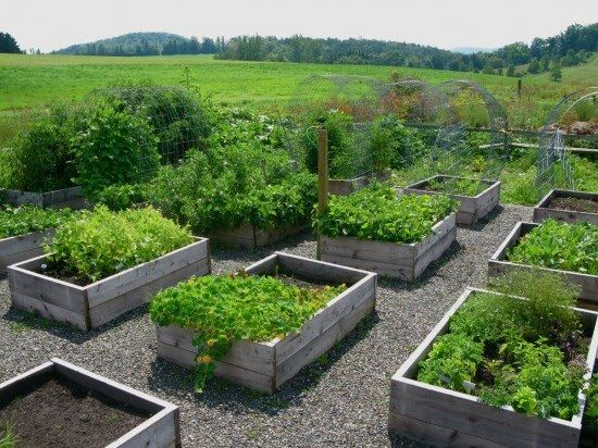 "Awesome veggie garden! From ""The Laurel Hedge"" blog."
