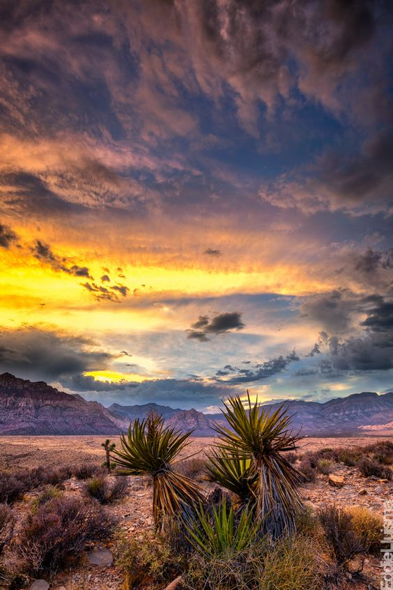 Atmospheric -Desert - Las Vegas - Nevada - USA