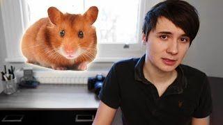 The story of Dan's Hamster