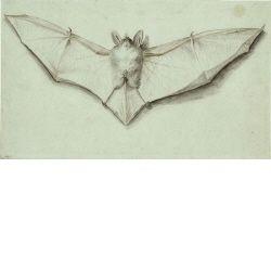 Fledermaus mit ausgespannten Flügeln