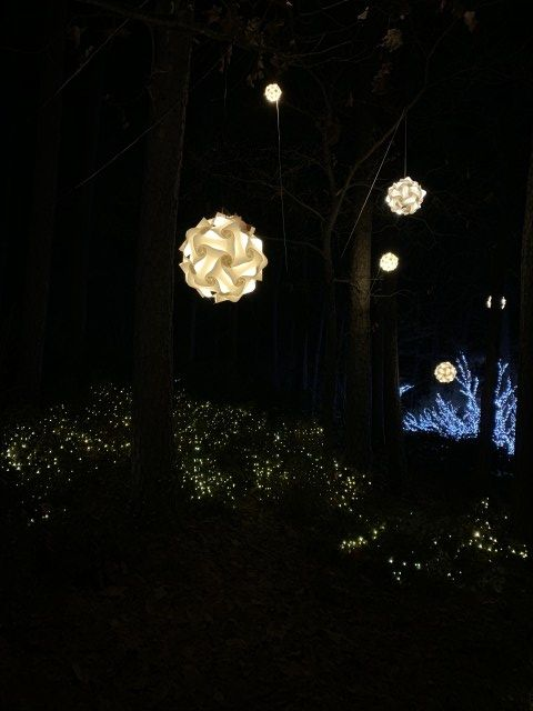 66826ddf20048461b5fb42ef54e5024d - Garvan Gardens Hot Springs Christmas Lights