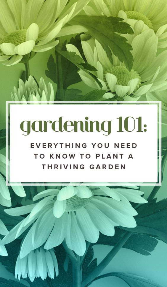 Gardening 101 everything you need to know to plant a - How to plant a flower garden for dummies ...