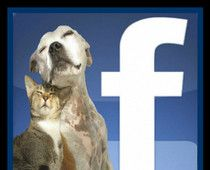 Social networking can connect homeless pets to new families in a way never before imagined.  Exciting times! #examinercom
