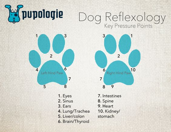 Dog Reflexology - Key Pressure Points