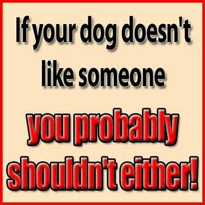 If your dog doesn't like someone, you probably shouldn't either!