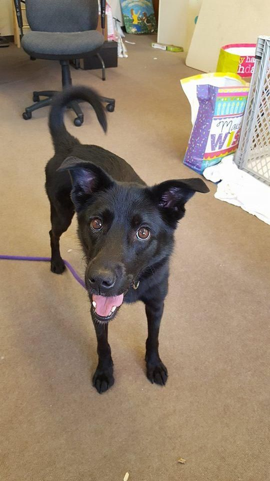 Adopt Tatiana On Petfinder Animal Rescue Dogs Collie Mix