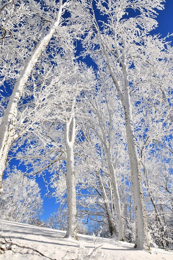Serious Rime Frost Canvas Print / Canvas Art by Alan Lenk