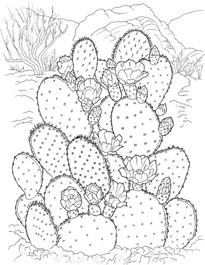 Prickly Pear Cactus coloring page Super Coloring flori