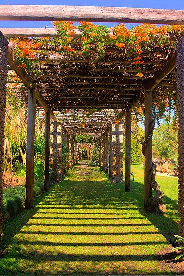 Trellis, Bougainvillea, Fairchild Gardens, Coral Gables