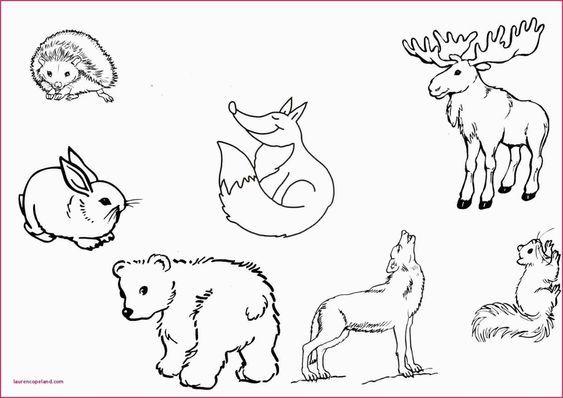 Pin Von Freude Kinder Auf Ausmalbilder Zum Ausdrucken Malvorlagen Pferde Ausmalbilder Tiere Ausmalbilder Pferde