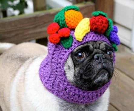 Carmen Miranda hat on Pickles the pug!!!  from Sweet Peach blog.