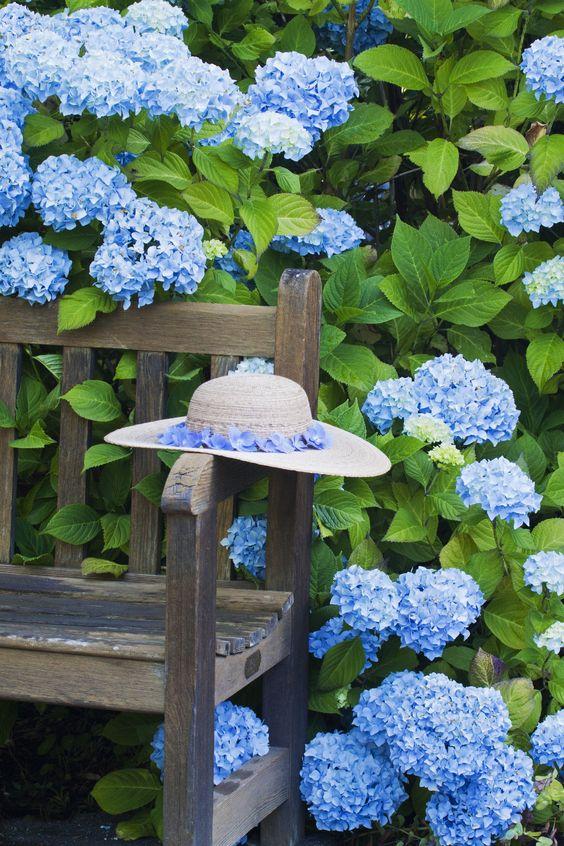 Le bleu est une valeur rare chez les fleurs. Découvrez comment pousser les hortensias à obtenir cette teinte tant désirée. #Hortensia #Fleurs #Jardin #Deco